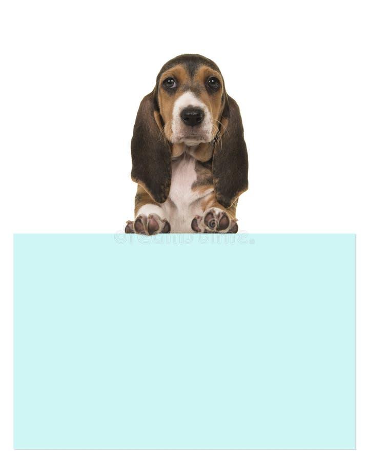 拿着与室的逗人喜爱的8个星期年纪法国露头小狗一个蓝纸板文本的 免版税图库摄影
