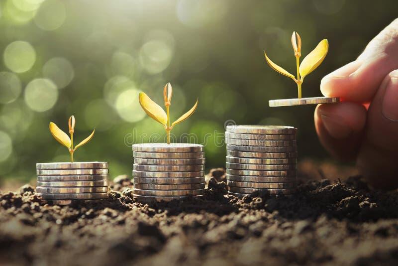 拿着与年幼植物的手金钱生长在硬币 概念攒钱 图库摄影