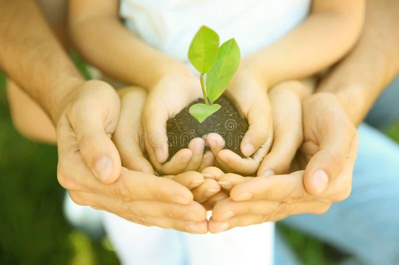 拿着与绿色植物的家庭土壤在手上 志愿社区 免版税库存照片