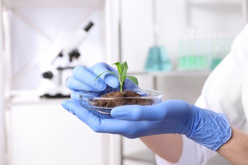 拿着与绿色植物的科学家培养皿在实验室 库存图片