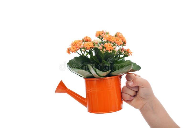 拿着与花的儿童现有量小的喷壶 免版税库存照片