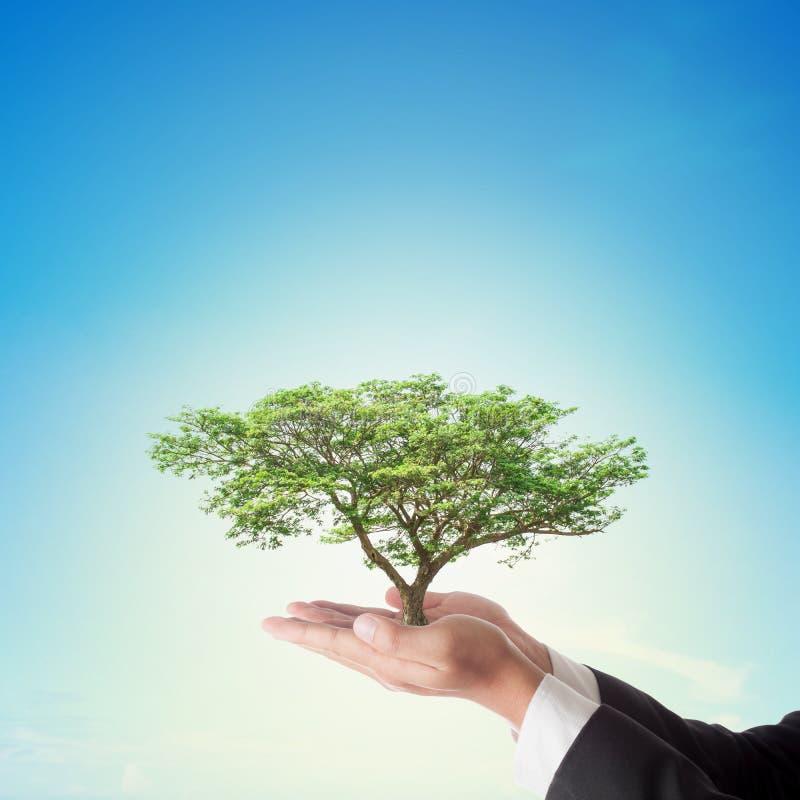 拿着与蓝天的商人手大树 免版税库存照片