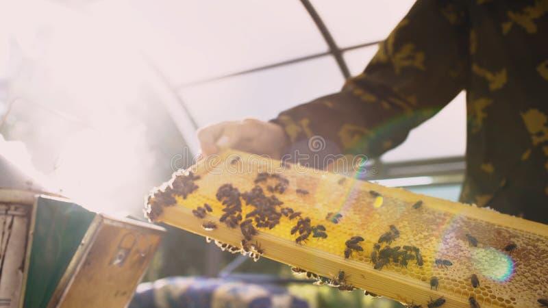 拿着与蜂的年轻蜂农人木制框架检查的,当工作在蜂房时 免版税图库摄影
