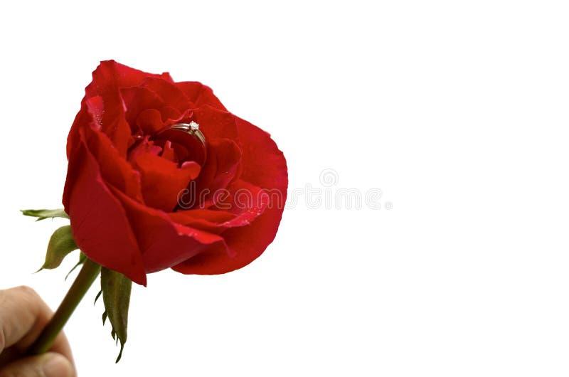拿着与银色钻戒的手一朵唯一红色玫瑰 免版税库存图片