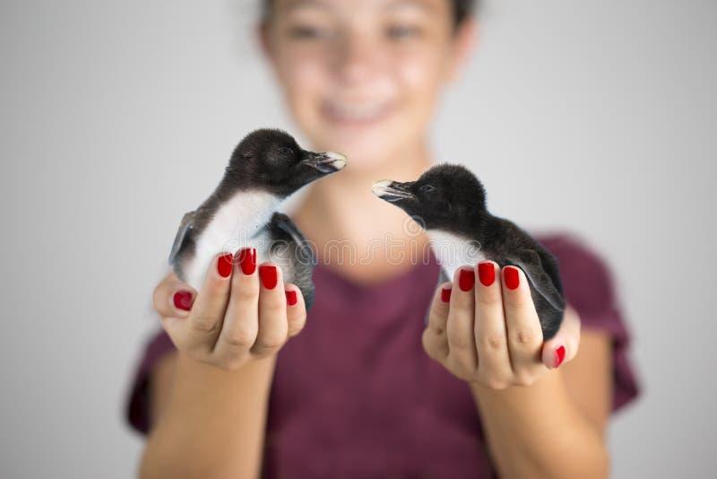 拿着两只企鹅小鸡的女孩 免版税库存照片