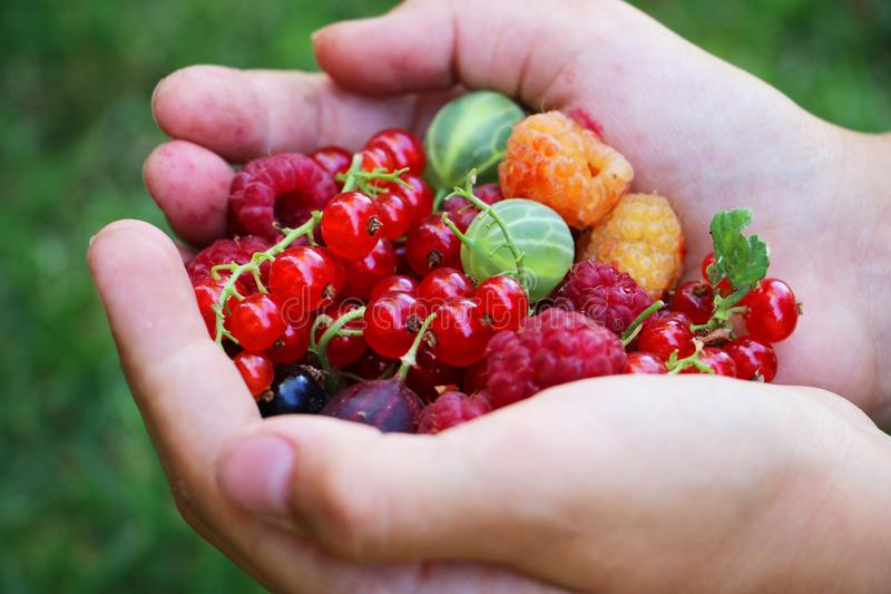 拿着五颜六色的莓果的新夏天混合手 免版税库存照片