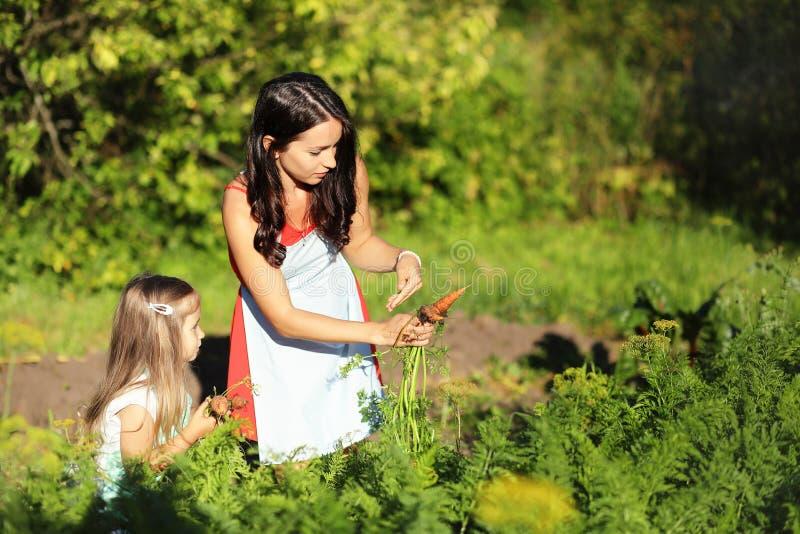 拿着从农场的女性花匠新鲜的有机菜 苹果庭院地面收获成熟时间结构树 免版税库存图片