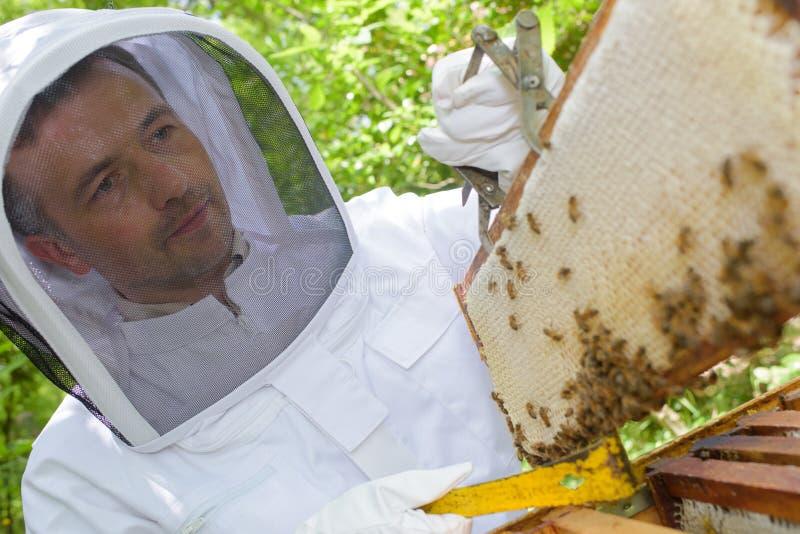 拿着从蜂房的蜂农框架 库存照片