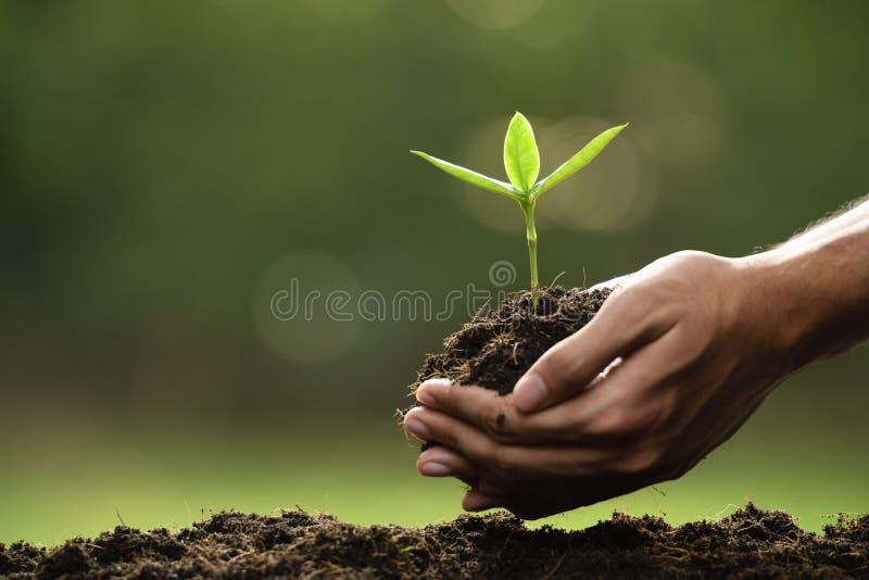 拿着和关心绿色年幼植物的手 免版税库存图片
