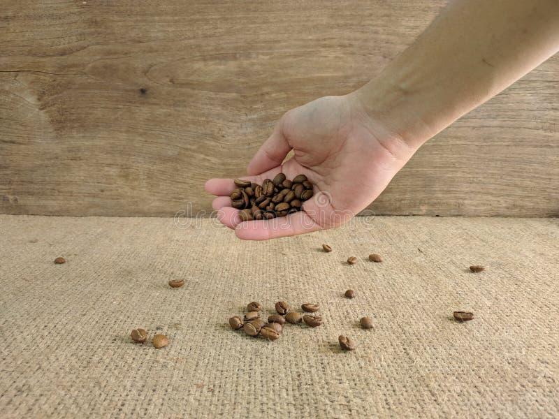 拿着咖啡豆的亚裔人的手 免版税图库摄影