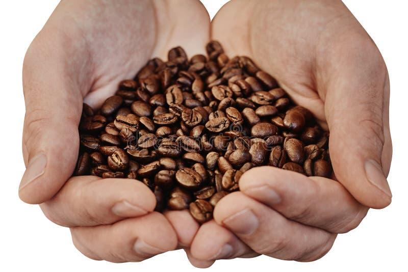 拿着咖啡豆的手被隔绝在白色背景 库存图片