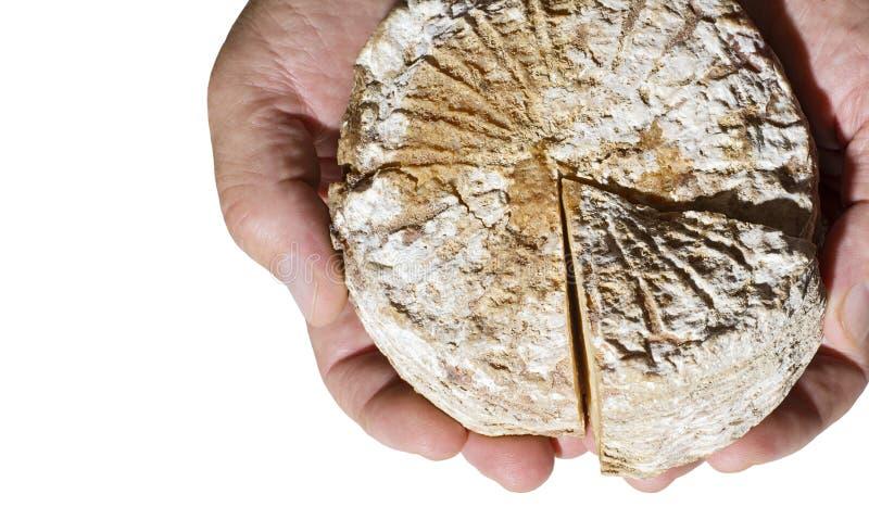 拿着圆的农夫乳酪的手 库存图片