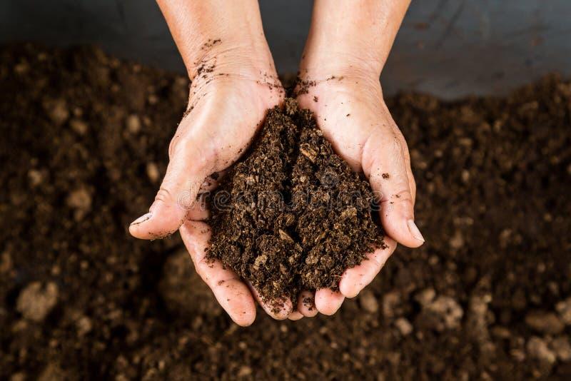 拿着土壤泥炭沼的手 免版税库存照片