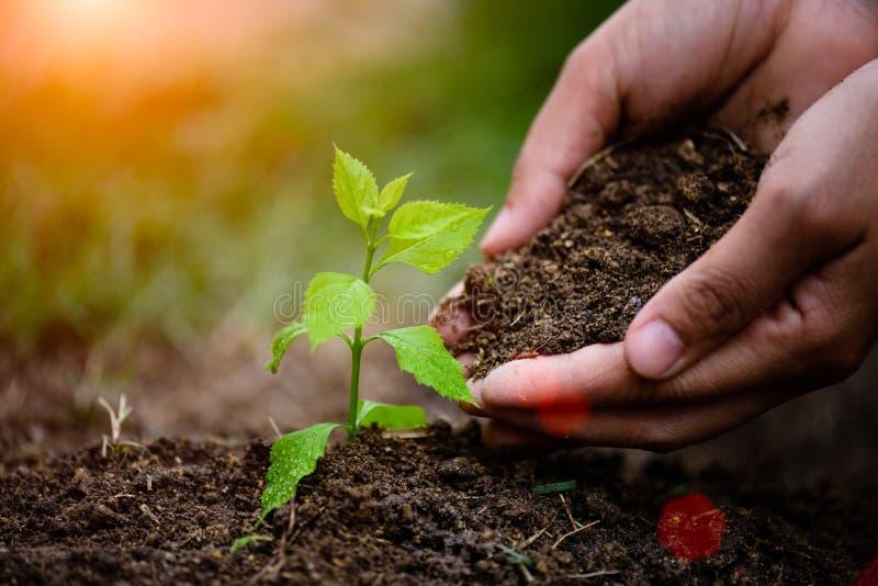 拿着土壤的手种植一棵年轻树 图库摄影