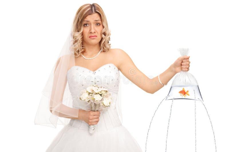 拿着在一个袋子的哀伤的新娘一个金鱼与hiles 免版税库存图片