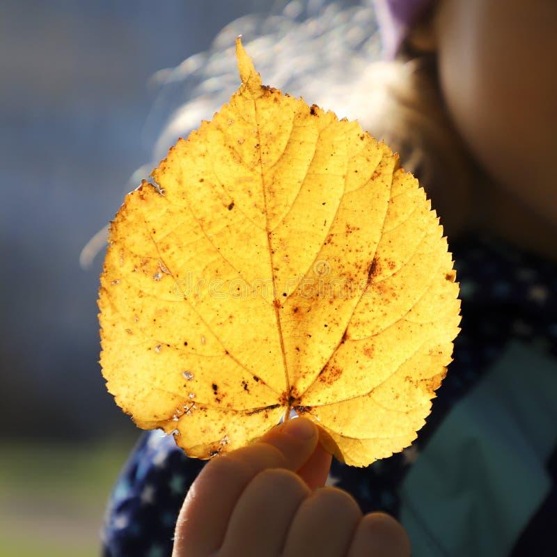 拿着在他的手上的孩子一片黄色叶子.图片