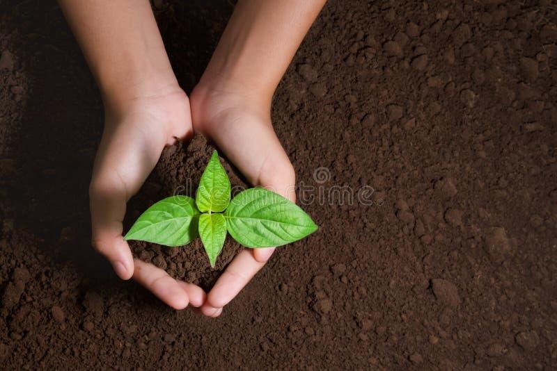 拿着在土壤背景的顶视图手年轻树种植的在庭院里 免版税库存图片