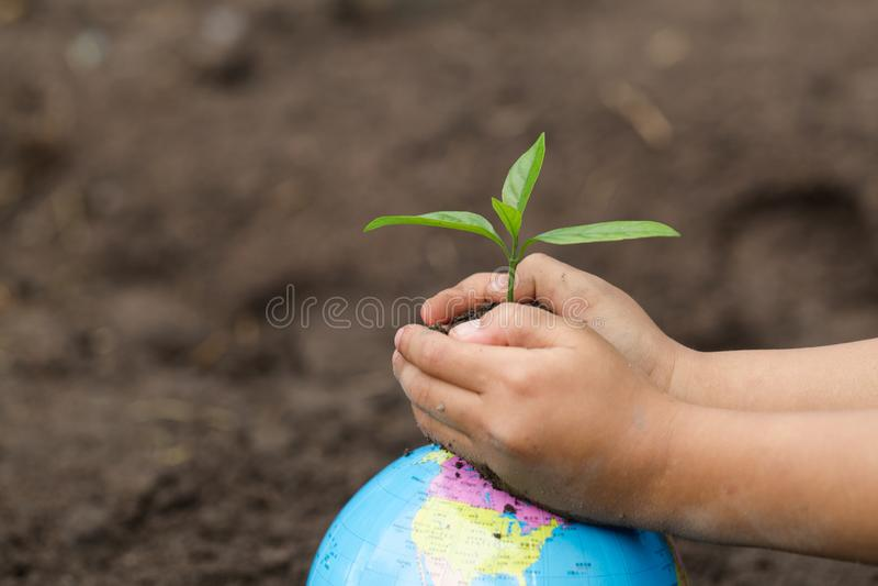 拿着在地球,植物的儿童手小幼木树,减少全球性变暖,世界环境日 免版税库存图片