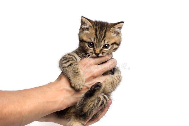 拿着在她的胳膊的年轻女人一只小的小猫 免版税库存照片