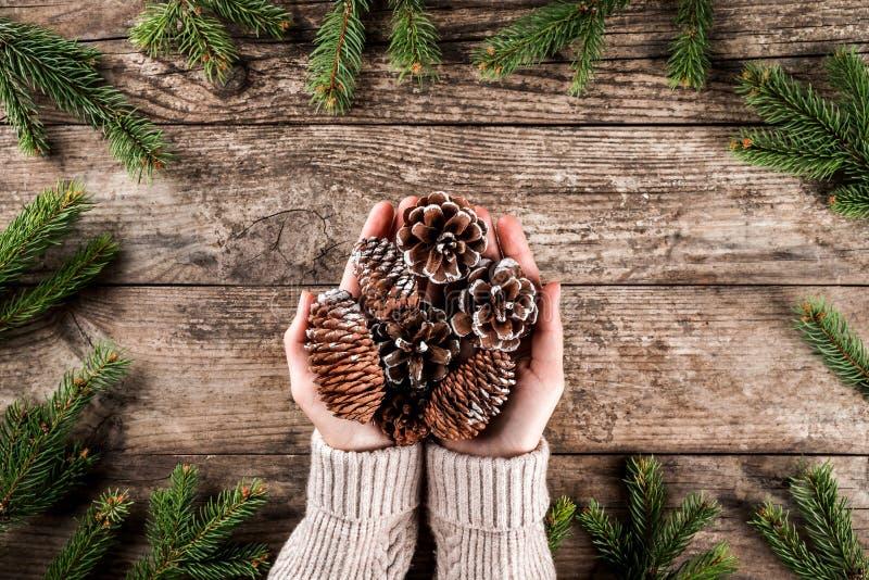 拿着在木背景与圣诞节冷杉分支,云杉,杜松,冷杉,落叶松属的女性手杉木锥体 免版税库存照片