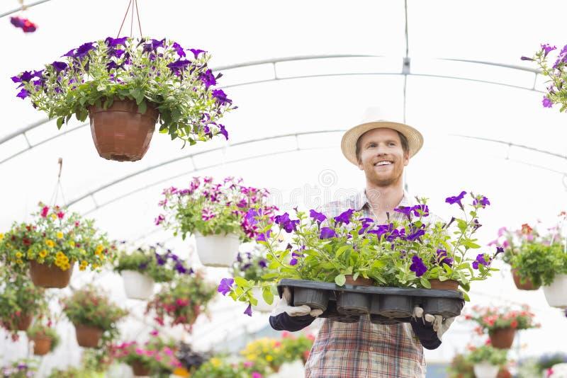 拿着在条板箱的愉快的花匠花盆在温室 免版税库存照片