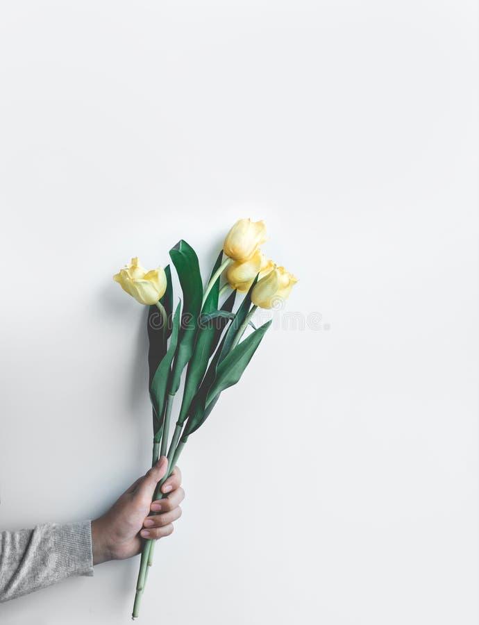 拿着在白色演播室背景的女性黄色郁金香 行家 库存图片