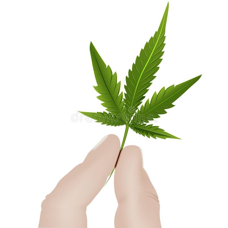拿着在白色背景的手的两个手指Lis大麻 向量例证