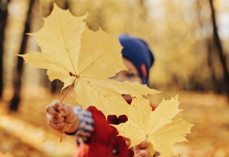 拿着在秋天森林背景的逗人喜爱的小孩男孩特写镜头画象金叶 免版税图库摄影