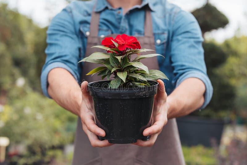 拿着在罐的围裙的花匠花在手上 免版税库存照片