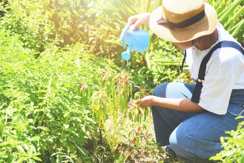 拿着在花和植物的从事园艺的妇女手倾吐的水有喷壶的在有晴朗的庭院里 免版税库存照片