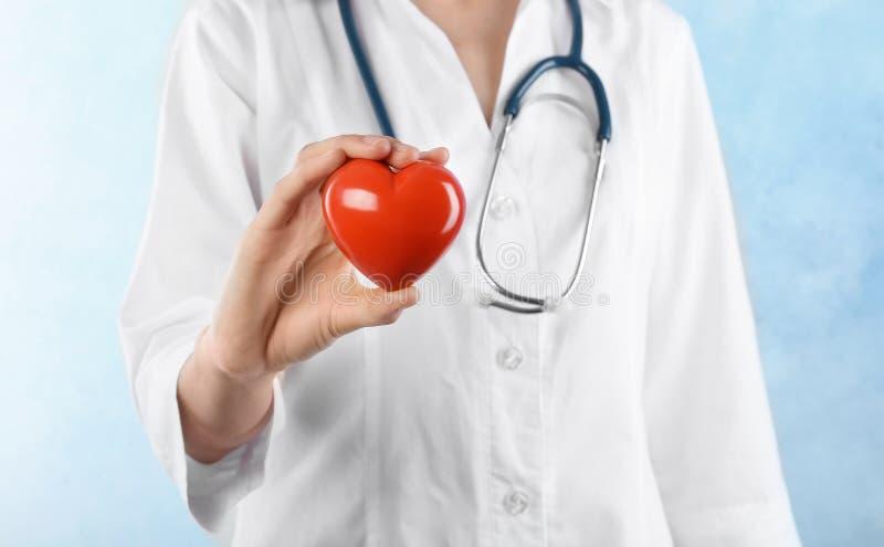 拿着在轻的背景的医生心脏模型 心脏病学服务 图库摄影