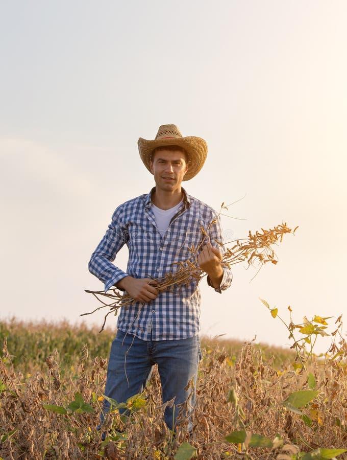 草帽农夫_英俊的农夫画象有拿着大豆的草帽的在收割期抽去