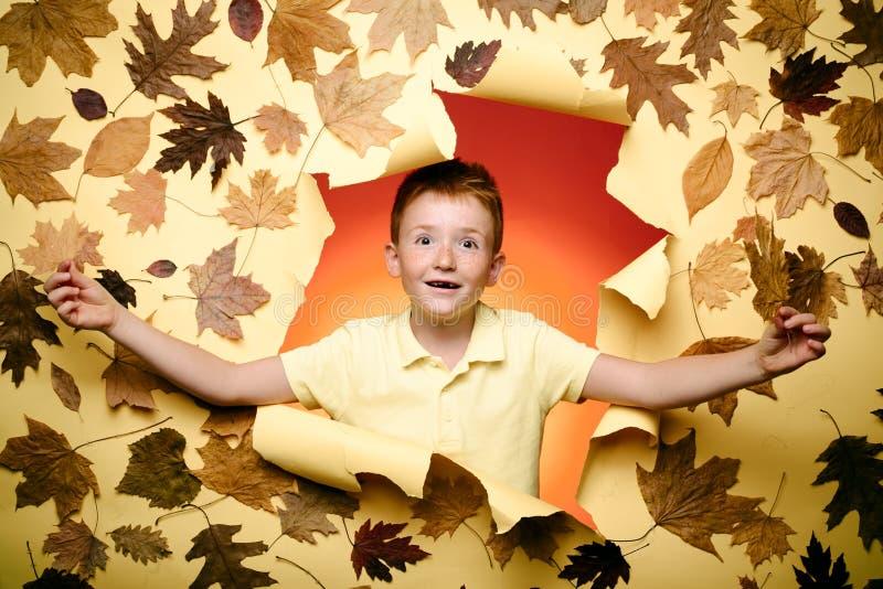 拿着在黄色背景的逗人喜爱的儿童男孩金叶 佩带在时兴的季节性衣裳的微笑的男孩有 免版税库存照片