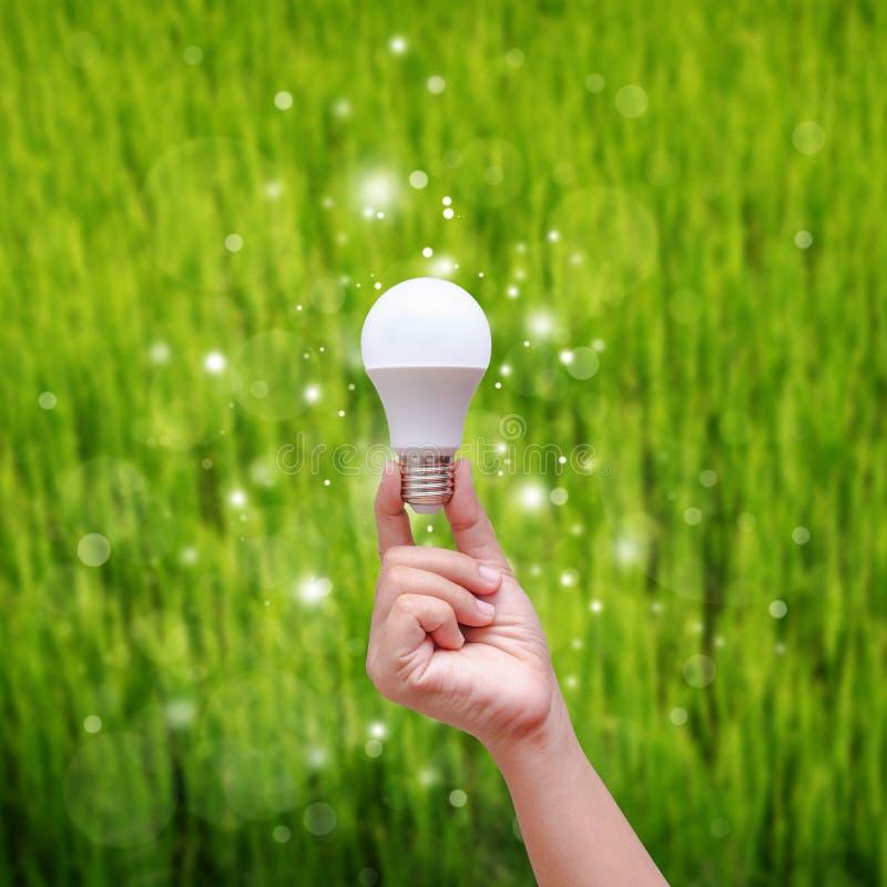 拿着在绿色backgroud的妇女手LED电灯泡 免版税库存照片