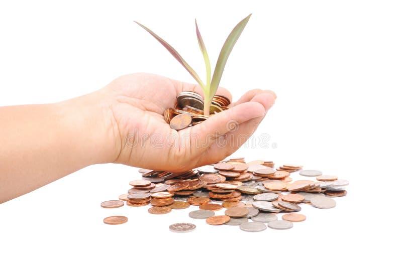 拿着堆硬币和一棵小植物的手发芽从Th 库存照片