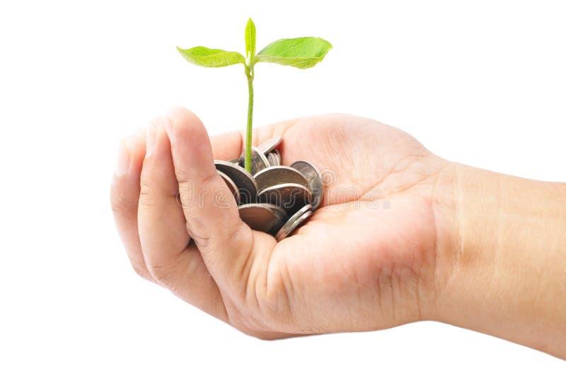 拿着堆硬币和一棵小植物的手发芽从Th 免版税库存图片