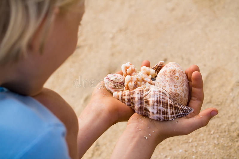 拿着壳,在壳的焦点的男孩特写镜头 库存图片
