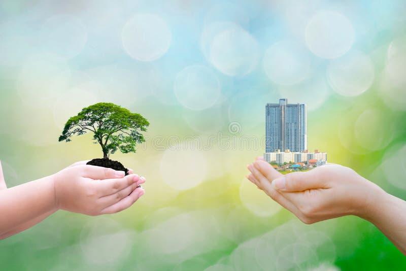 拿着大植物树大厦有在被弄脏的背景的生态概念儿童人的手 免版税库存照片