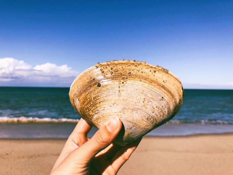 拿着大蚌蛎壳的手 图库摄影