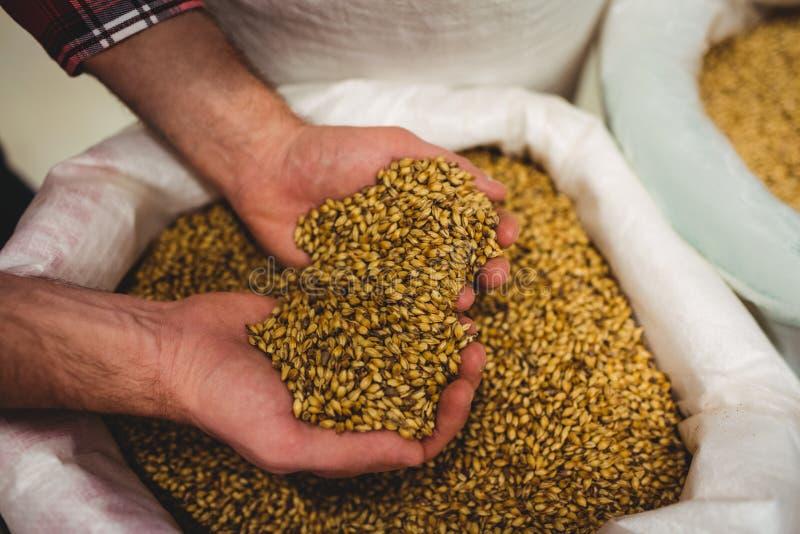拿着大麦的啤酒厂制造商大角度看法 免版税库存照片