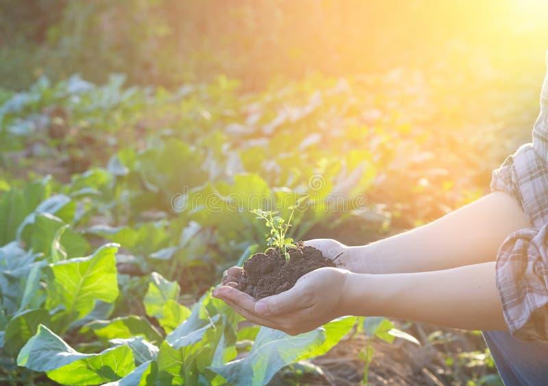 拿着婴孩植物土壤,男性农艺师审查的农夫 库存照片