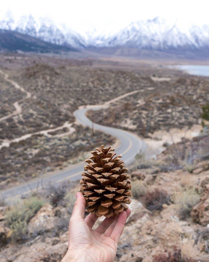 拿着对光的一个杉木锥体与弯曲道路和内华达山 库存照片