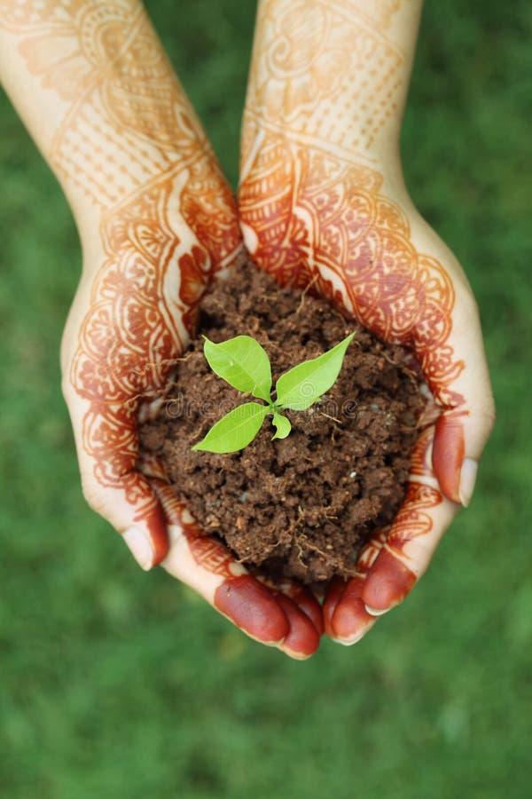 拿着小植物-新的生活的手 免版税库存照片