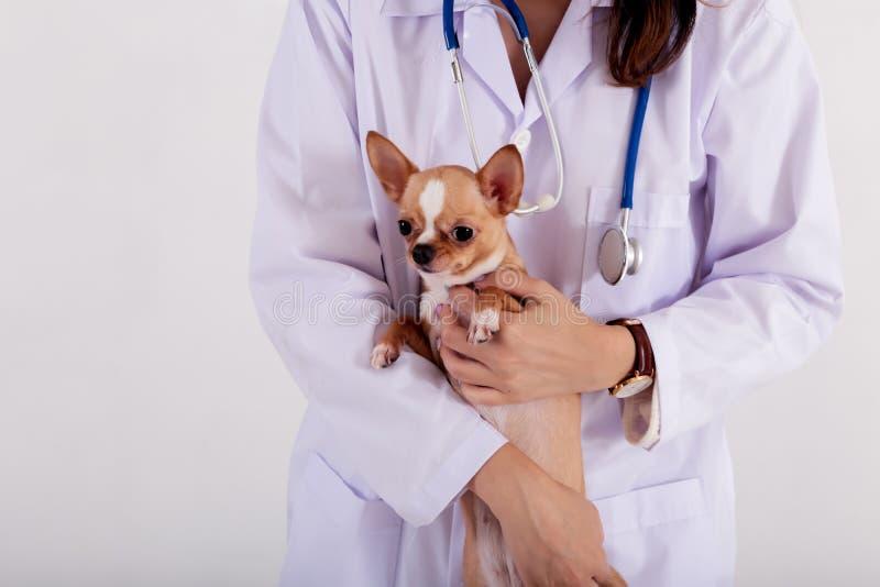 拿着小狗的女性兽医 免版税库存照片