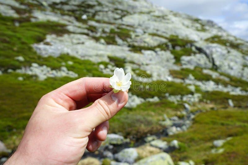 拿着小白花的手 免版税图库摄影