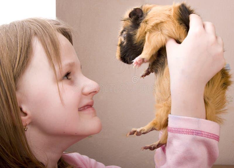 拿着小的猪的女孩几内亚 库存图片