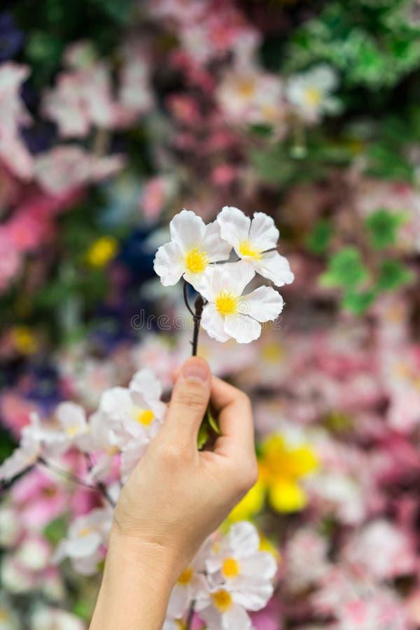 拿着小花束的妇女手 免版税图库摄影