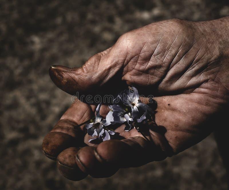 拿着小花的老人手 免版税库存图片