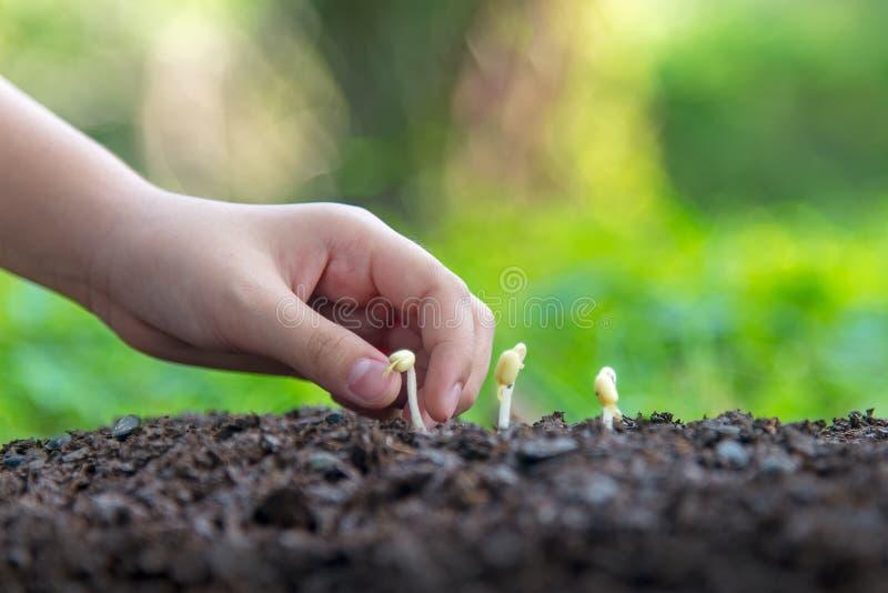 拿着年幼植物的小亚裔女孩在自然公园和看植物和种子成长阶段为减少全球性变暖 图库摄影