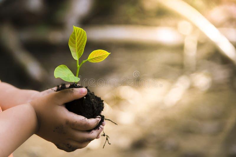 拿着幼木的年轻人的手被种植在土壤 并且Th 库存图片